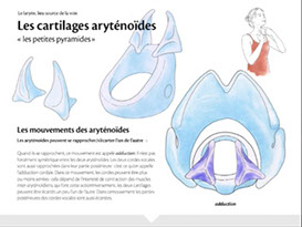 animation des cartilages aryténoïdes